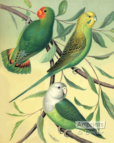 Love Birds by W Rutledge - Art Print
