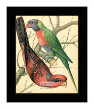 Two Colorful Lory Birds - Framed Art Print