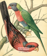 Two Colorful Lory Birds by W Rutledge - Art Print