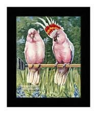 Cockatoos Parrot - Framed Art Print