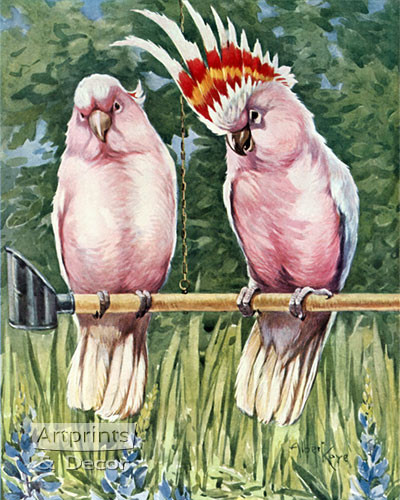 Cockatoos Parrot by Albert Kaye - Art Print