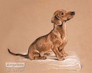 Schnoodle Dachshund by Lucy Dawson - Art Print