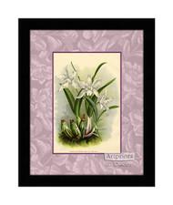 White Orchids - Framed Art Print