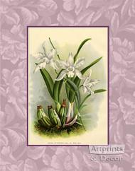 White Orchids - Art Print