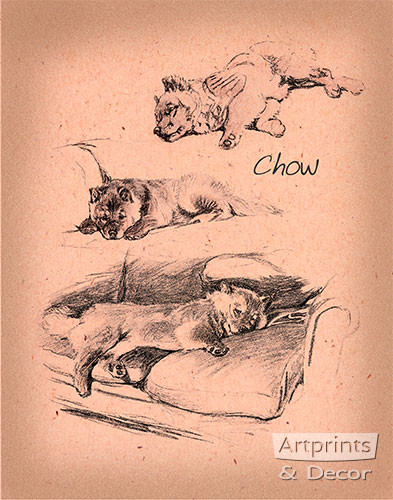 Chows - Art Print