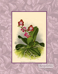 Rose Orchids - Art Print