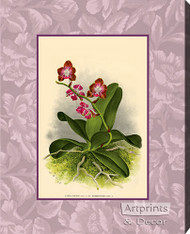 Rose Orchids - Stretched Canvas Art Print