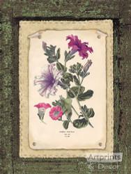 Petunias - Art Print
