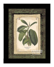 Rubber Plant - Framed Art Print