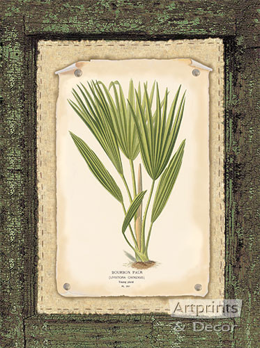 Bourbon Palm - Art Print