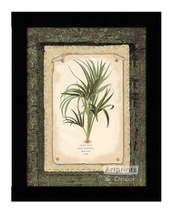 Curly Palm - Framed Art Print