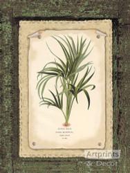 Curly Palm - Art Print