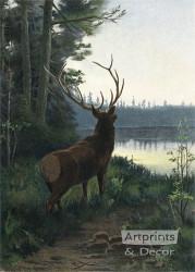 Wapiti Elk by Oliver Kemp - Art Print