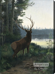 Wapiti Elk - Stretched Canvas Art Print