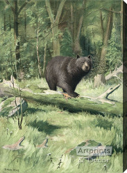 Adirondack Black Bear by Oliver Kemp - Stretched Canvas Art Print
