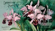 Dabrook's Perfumes by Paul de Longpre - Art Print