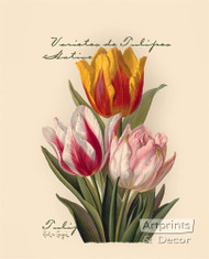 Tulips by Paul de Longpre - Art Print