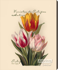 Tulips by Paul de Longpre - Stretched Canvas Art Print