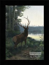 Wapiti Elk - Framed Art Print