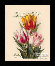 Tulips - Framed Art Print