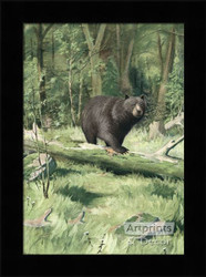 Adirondack Black Bear - Framed Art Print