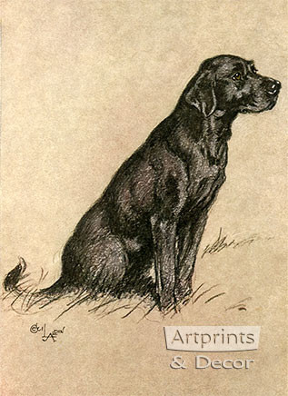 Black Labrador by Cecil Aldin - Framed Art Print