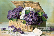 Invoice of Violets by Paul de Longpre - Art Print