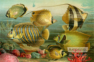 Coral Reef Fish - Art Print