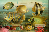 Coral Reef Fish - Stretched Canvas Art Print