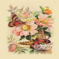 Butterflies & Wild Roses - Art Print