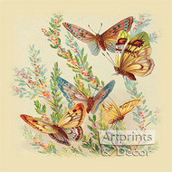 Butterflies & Cape Heath - Art Print