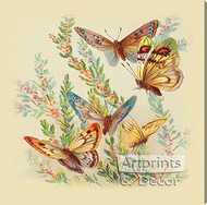Butterflies & Cape Heath - Stretched Canvas Art Print