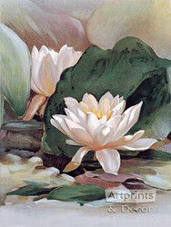 Water Lily - Art Print