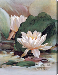 Water Lily - Stretched Canvas Art Print