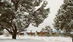 deer stalking guide