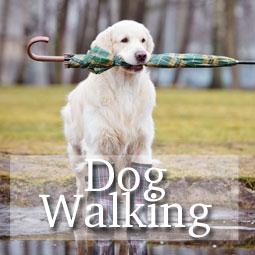 Dog Walking Guides