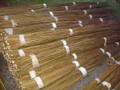 100 x Salix Viminalis 2.5 metre Willow Rods / Whips