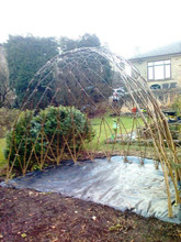 3.0m Long Living Willow Arbour (1.8m high)