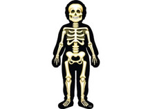 Giant skeleton floor puzzle                                    34 pce 120x60 cm TFL-091