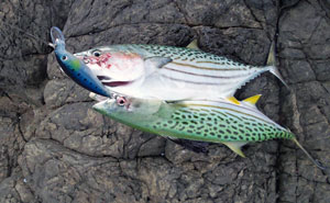 Rapala XXX Rap Cast Long Casting Lures