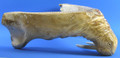Walrus Jawbone Cribbage Board Walrus