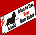 Dachshund Bumper Sticker - My Dachshund is Smarter than Your Honor Student