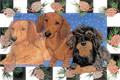 Checker and Acorn Bordered Dachshund Holiday Christmas Card - Single Card of Multi-Pack