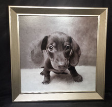 Dachshund Puppy Framed Artwork 12x12 Black and White Image