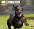 2018 Just Dachshunds Daily Desk Box Calendar