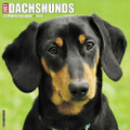 2018 Just Dachshunds 12x12 Large 18 Month Calendar