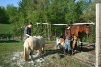 Liz & Sam grooming animals at Alabu