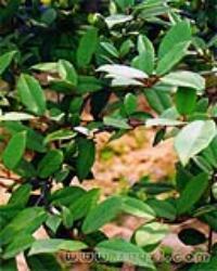 hutuiziye-yuantai-l.jpg
