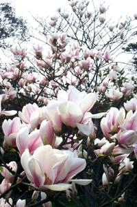 xinyi-yuantai-l.jpg