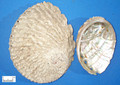 Shijueming (abalone shell )---石决明(powder100g/bottle)